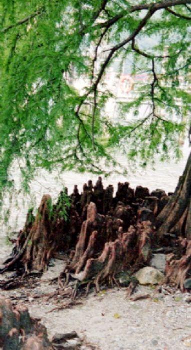 Gormley-like roots