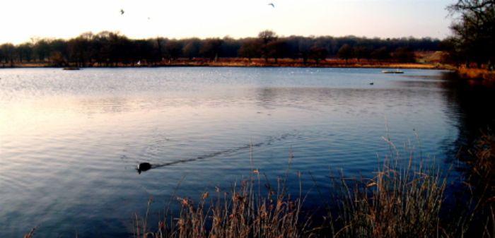 Richmond Park - Pen Ponds