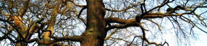 Richmond Park - parakeet