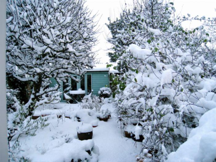 02/02/09 The winter garden