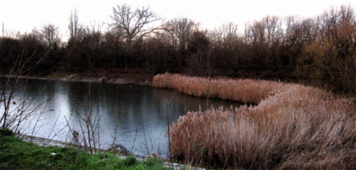 Reed beds, small reservoir, Barnes