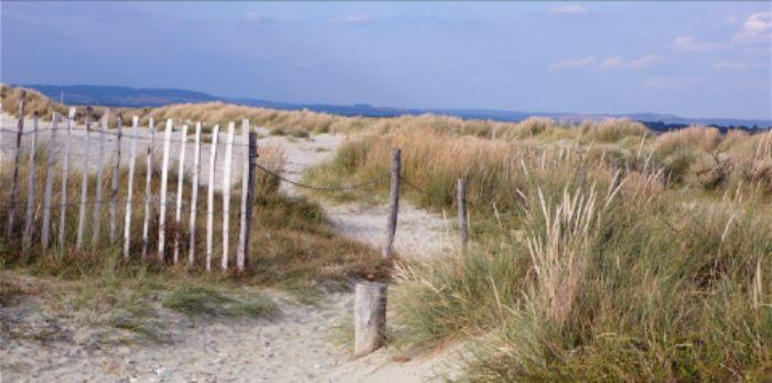 Sand dunes - West Wittering