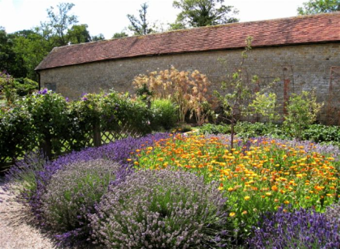Lavender and marigolds