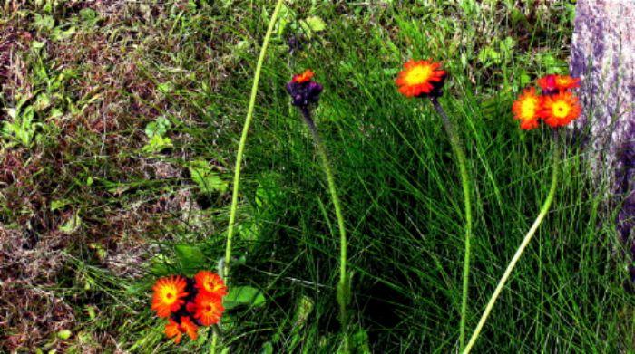graveyard flowers...