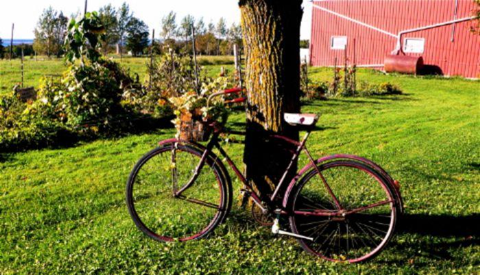 Down on the farm near Balaclava, Ontario