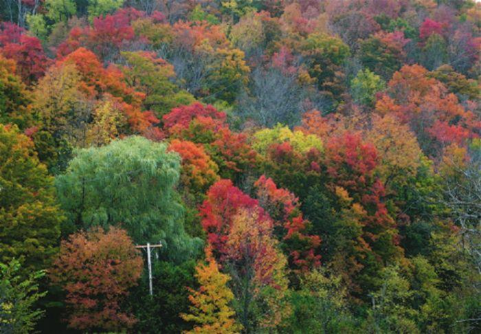 Fall colours  ...