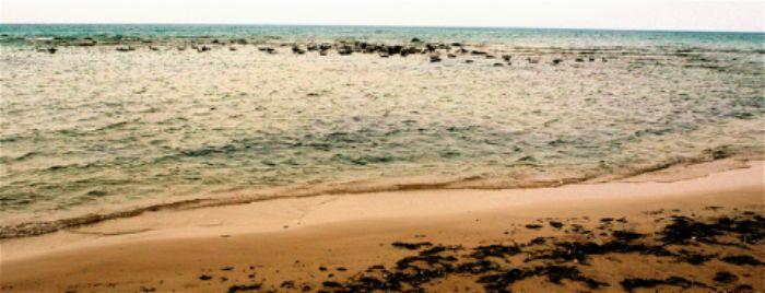 Seabirds on a sandbank ...