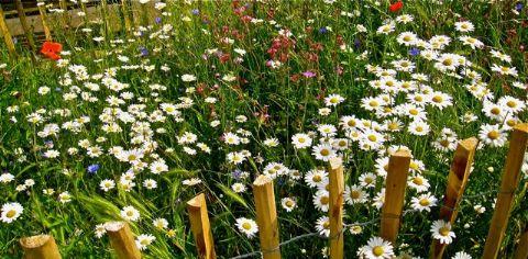 02 wild flowers barnes