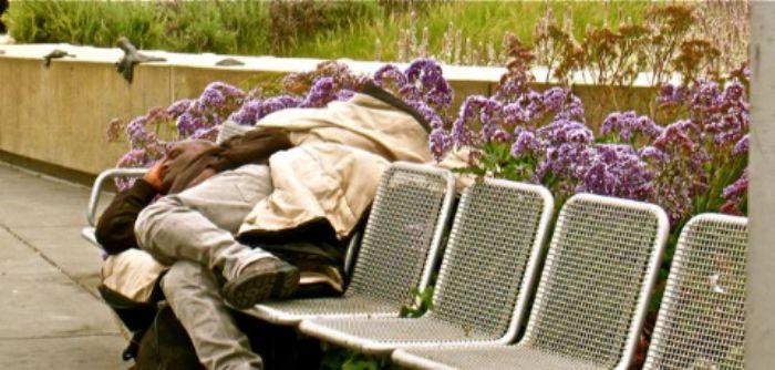 lilac siesta  ...