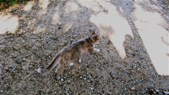 The railway cat patrol ...