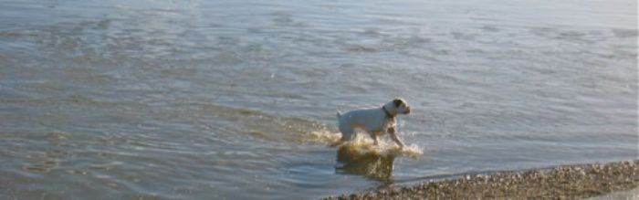 Enjoying a dip in the Thames on New Year's Day 2013 ...