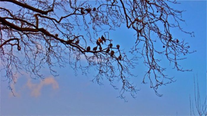 Barnes birds waiting for Springtime ...