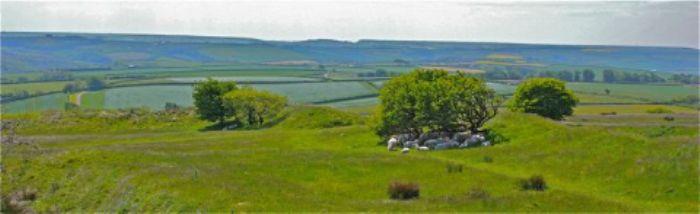 Flock of sheep - Blackdown Rings