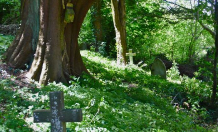 Milton Abbas churchyard