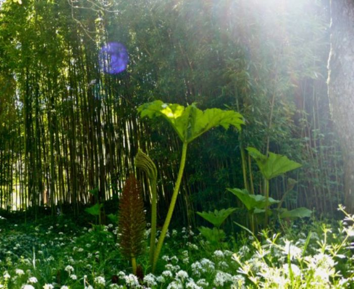 Farewell through the bamboo ...