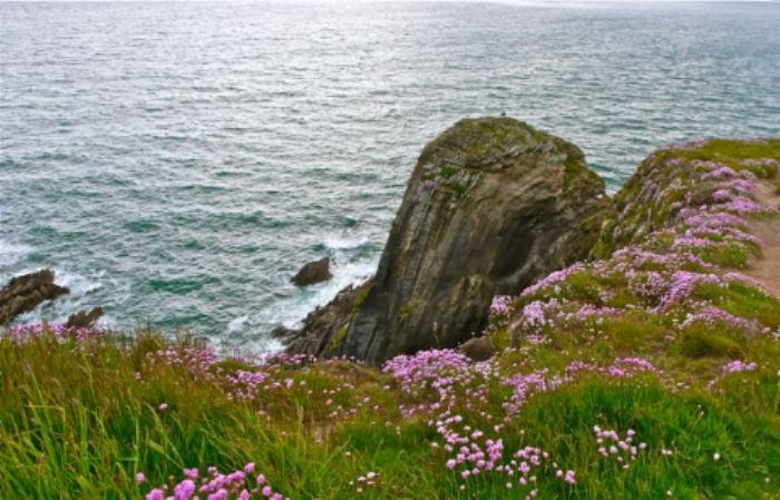 Pinks and greens - summer by the sea ...