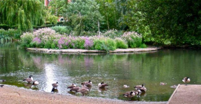 Island - Barnes Pond - summer 2013