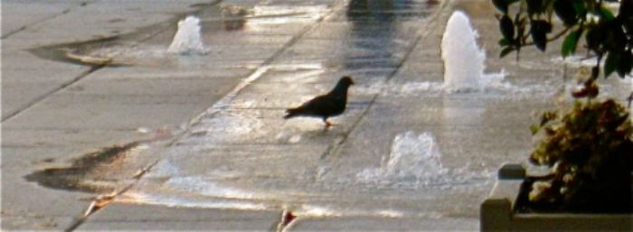 A painterly pigeon cooling down at the RA ...