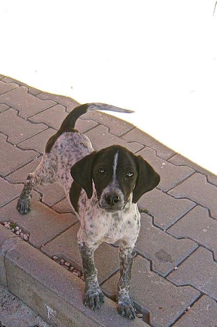 Xanthos - Top dog 1