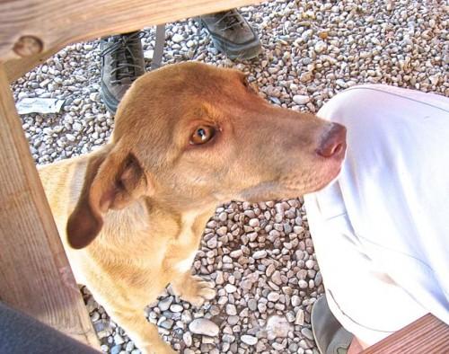 Xanthos - Top dog 2 sharing the picnic ...