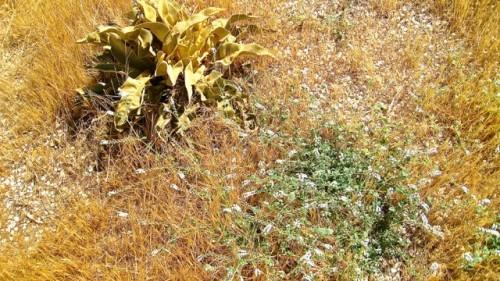 Xanthos - Sunbaked flora ...