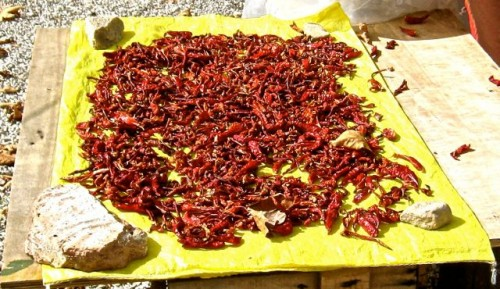 Tlos - stall owner drying chillies
