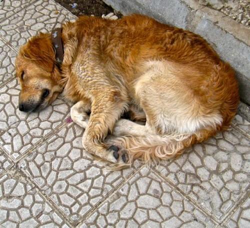 Fethiye - dog in the rain
