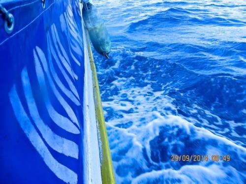 Kaunos - seaward tracking down our gulet ...