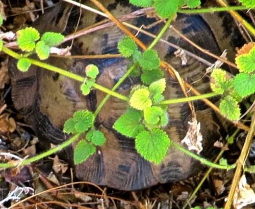 Kas - the tortoise reincarnation ...