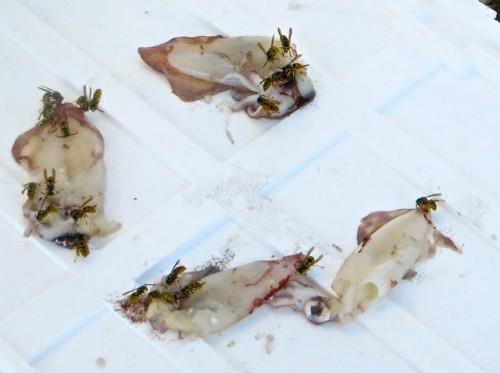 Bodrum - wasps enjoying squid ...