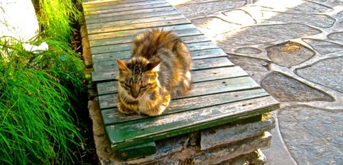 A golden cat ...