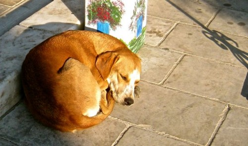 A golden dog ...