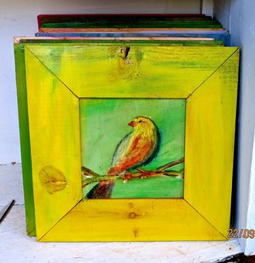 Kas - colourful bird paintings