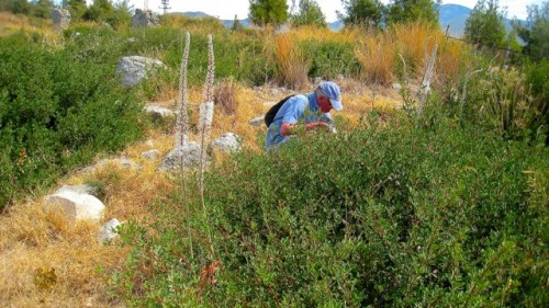 Xanthos - exploring the natural flora and fauna ...