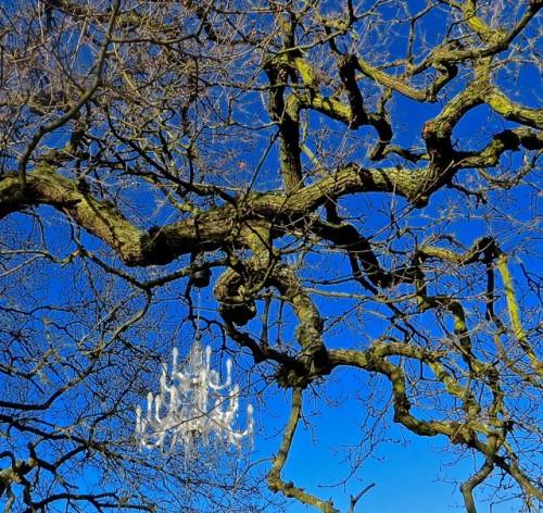 Branching out in Kew