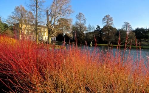 Winter's day - Kew
