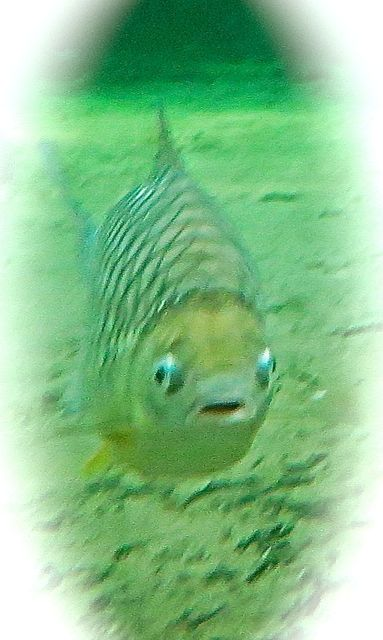 This is how I feel - even fish get unhappy!