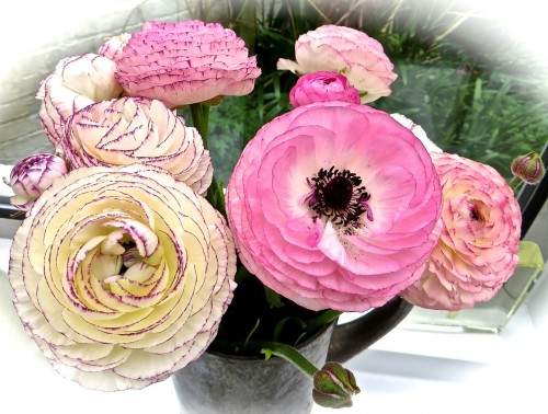 Flowers from Rosy