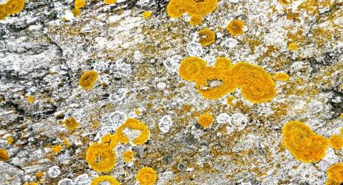 Lichen - meant to denote low pollution ...