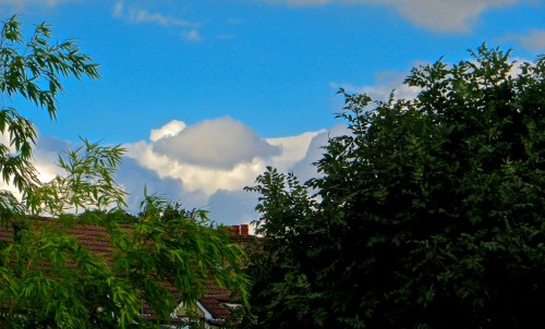 Flying saucer at the bottom of the garden ...