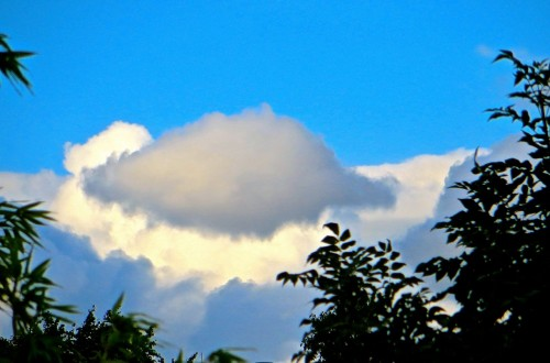 ...or is it a rather monstrous fat mouse fast asleep on a cloud?