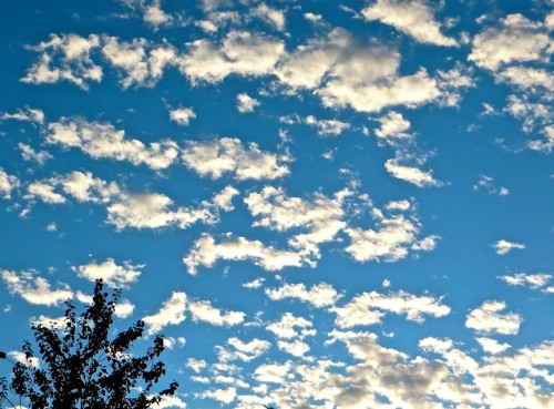 Dolly clouds