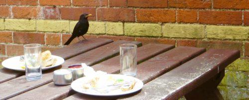 Beaulieu blackbird
