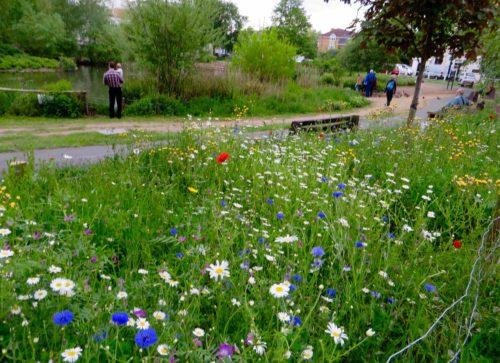 Wild flower garden at Barnes Pond