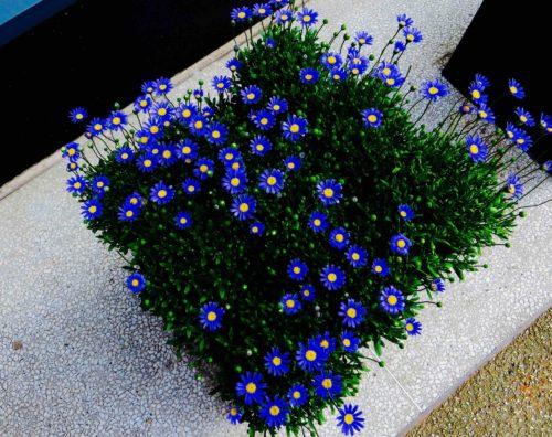 Blue box in Barnes