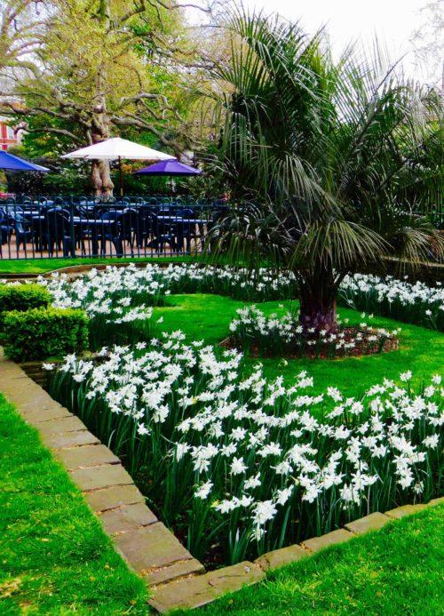 City spring flowers in Embankment Gardens 2