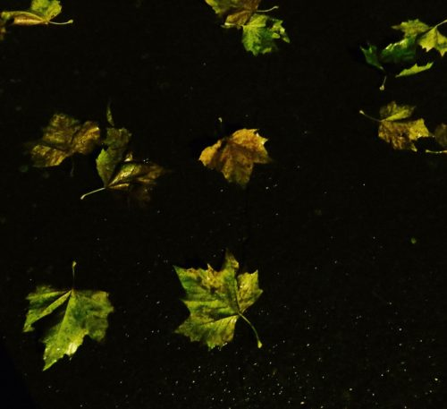 Falling leaves ...