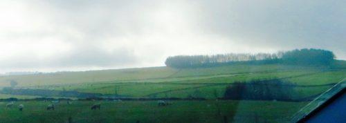 Buxton - countryside with sheep
