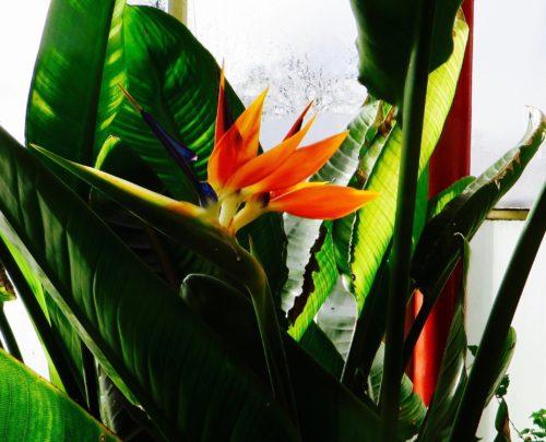 Buxton Winter Gardens - exotic in orange